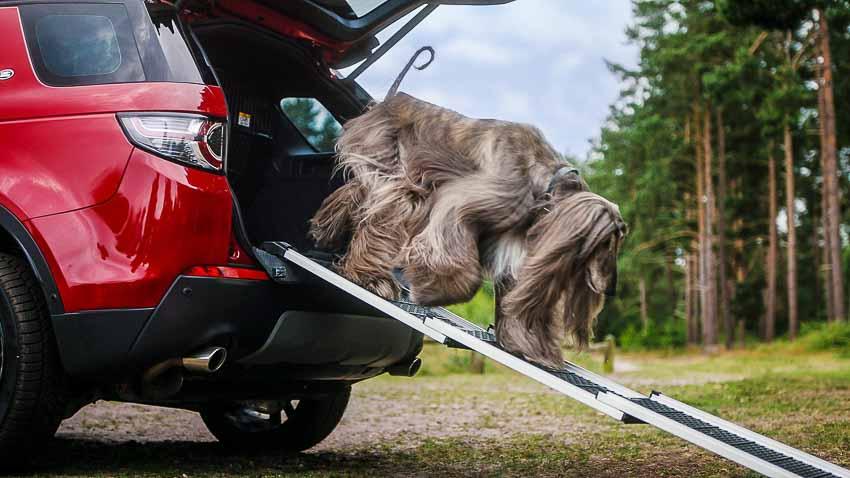 Land Rover ra mắt gói phụ kiện dành riêng cho thú cưng 1