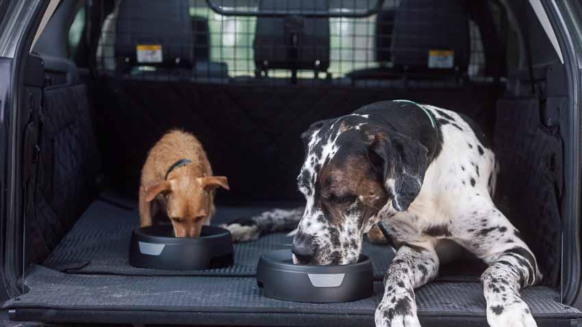 Land Rover ra mắt gói phụ kiện dành riêng cho thú cưng 2